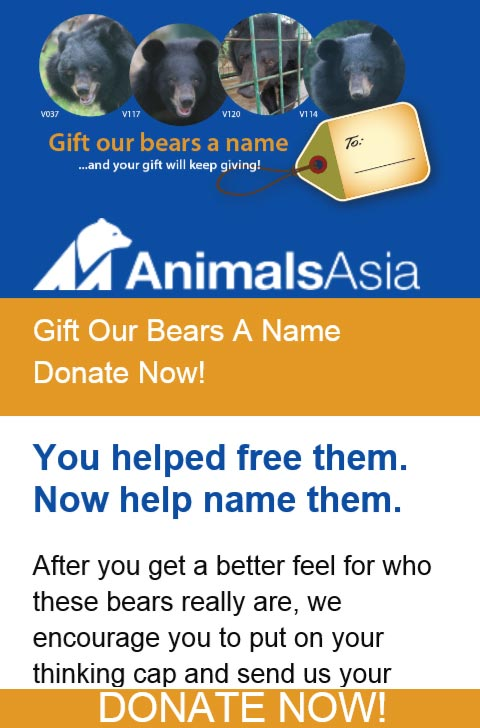Gift Our Bears A Name